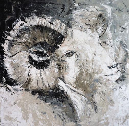 Widder, Tierporträt, Tierethik, Tierschutz, Schönheit