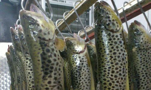 """Fangfrische Fische """"Kärntna Laxn"""" aus dem Maltatal von der Fam. Truskaller Georg"""