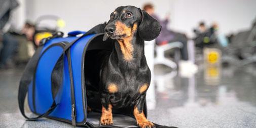 Urlaub mit Hund, Fliegen, Transportbox