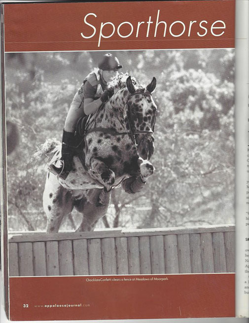 Chocklate N Confetti Appaloosa Sport Horse * Chocklate Confetti Sport Horse