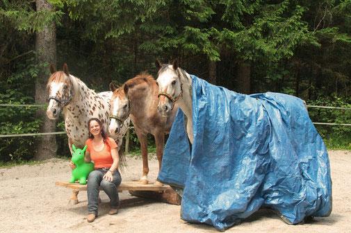 bodenarbeit mit pferden übungen