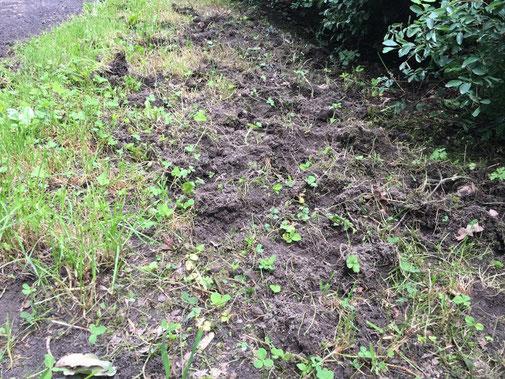 Spuren der Wildscheine am Zaun