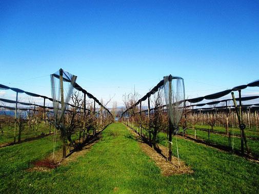 Exploitations agricoles en coopératives - améliorer les rendements et le conseil avec Agralis