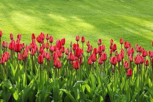 gestion des arrosages des espaces horticoles avec Agralis services - Lot et Garonne