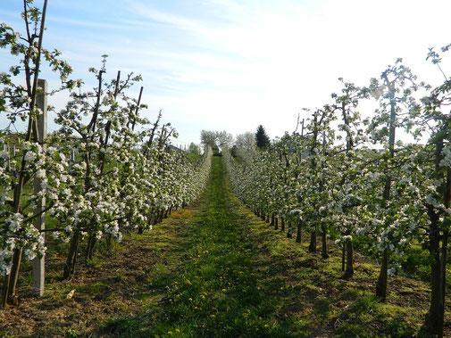 Vergers sous surveillance avec la gestion des irrigations avec Agralis