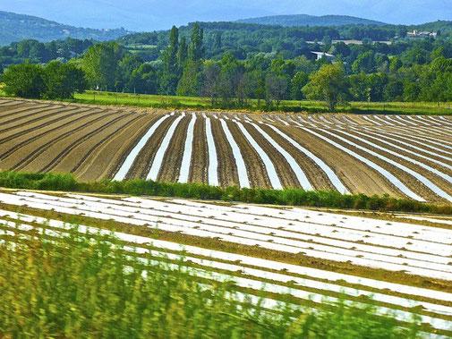 Irrigation optimisée pour l'agriculture avec le suivi d'Agralis