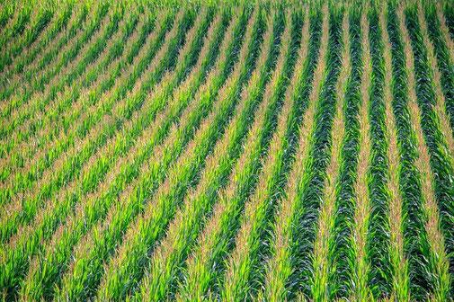 qualité des semences avec une bonne gestion des sols - conseils agralis