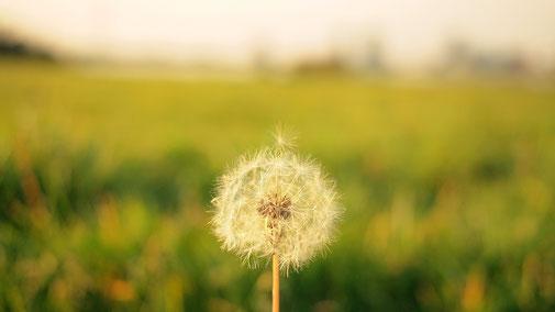 Objectif Sourire & Légèreté