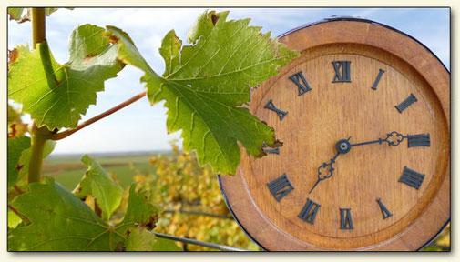 Geschichte Lausitzer Wein zeitliche Betrachtung