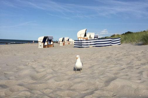 Fewo, Ferienwohnung in Strandnähe in Zingst an der Ostsee