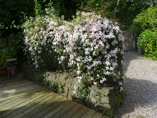 Gartenbau Luzern Naturnahe Gärten