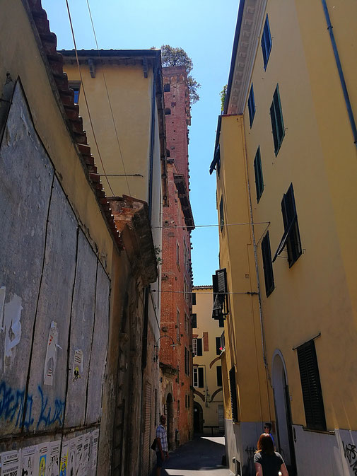 Blick auf den Torre Guinigi, Lucca aus der Via delle Chiavi D'Oro