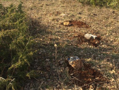Trüffelsporen auf den Truffières