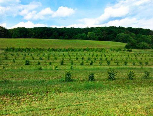 Trüffelplantage Périgord