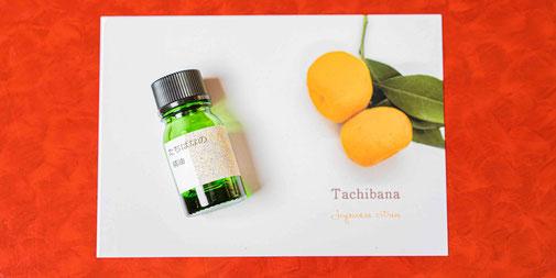 タチバナ Citrus Tachibana