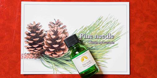 パインニードル Pinus sylvestris