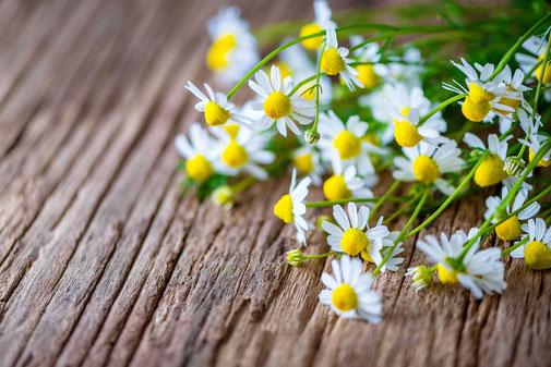 Création clé en main de vos ateliers d'aromathérapie familiale et pédiatrique