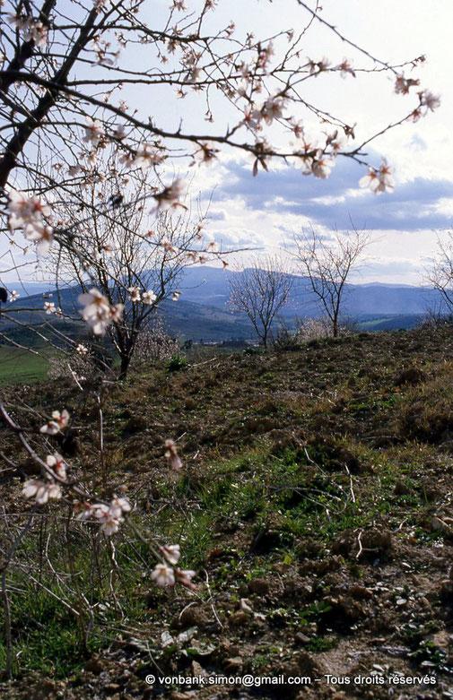Annaba (Bône) : Massif de l'Edough - Amandiers au printemps