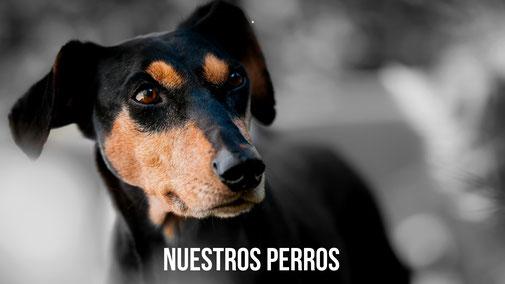 NUESTROS PERROS PROTECTORA APASA
