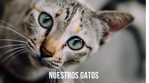 NUESTROS GATOS PROTECTORA APASA