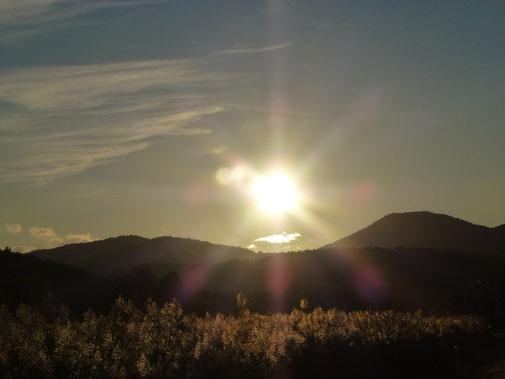 Ein neuer Morgen in der Pfalz