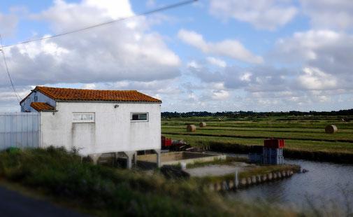 Cabane ostréicole de l'établissement Moissenot dans le marais de Brouage