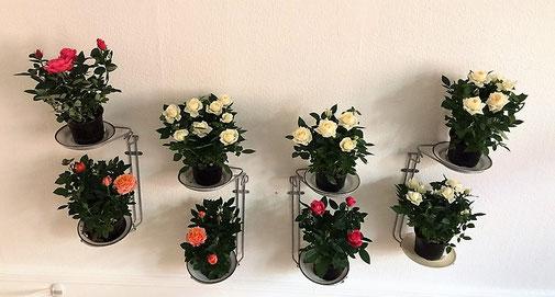 Affaldssortering til et skab i et køkken med affaldstativer fra affaldssorteringssystem Flower5, som planteholder 4