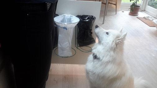 Affaldssortering i et køkken til et skab med billigt affaldssorteringssystem Flower 4