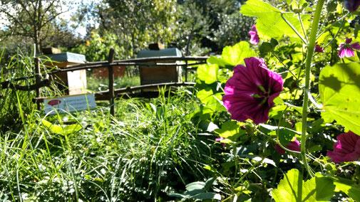 Bienenerlebnisgarten Bienenretter Wiese