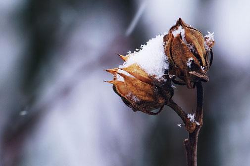 Pflanzen und Blütenstände im Winter
