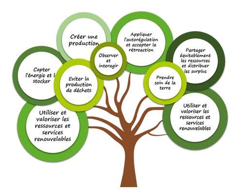 Arbre résumant les principes éthiques et conceptuels de la permaculture