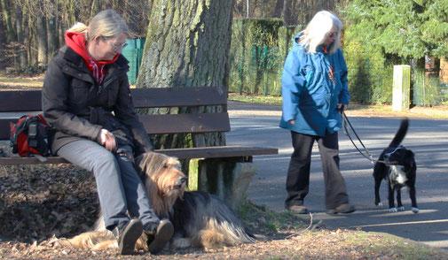 Zwei Hunde werden entspannt aneinander vorbei geführt.