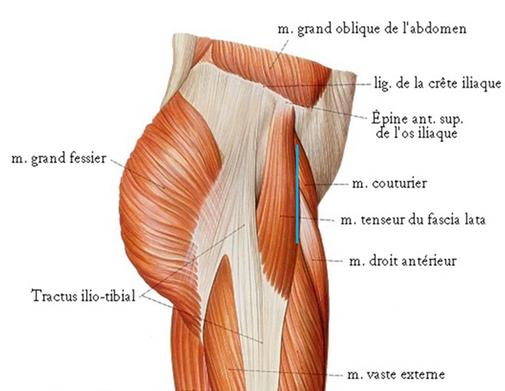 anatomie de la hanche prothèse, Dr Rémi Toulouse chirurgie orthopédique