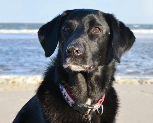 Fotovorlage für das Hundegemälde