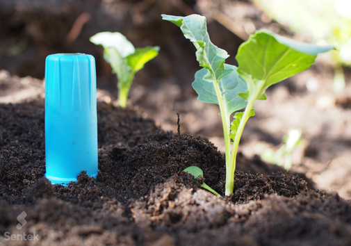 drill drop, sentek, agralis, capteur, humidité du sol, tensiomètre