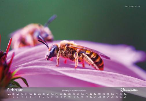 Bienen auf Blüte Bienenretter Charity Kalender 2021