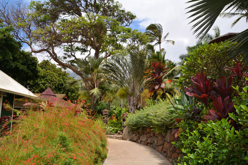 Maui Tropical Plantation