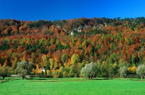 Herbstlicher Buchenmischwald an den Weserhängen © Frank Grawe, Kulturland Kreis Höxter