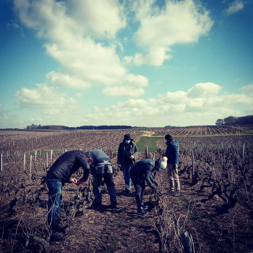 workshop-learning-pruning-session-vineyard-vinestock-vine-Vouvray-Tours-Amboise-Loire-Valley-vinegrower-winery-Rendez-Vous-dans-les-Vignes-Myriam-Fouasse-Robert