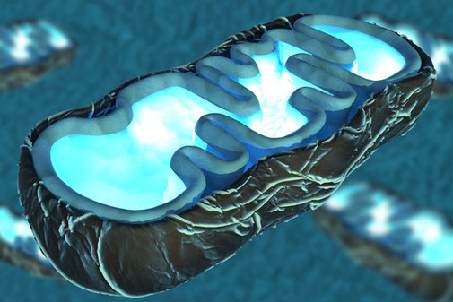 Radiant Reality Blog | Revitalize Your Mitochondria | Mitochondria