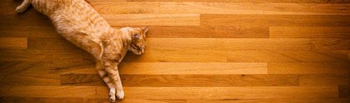 Katzen lieben Parkettböden