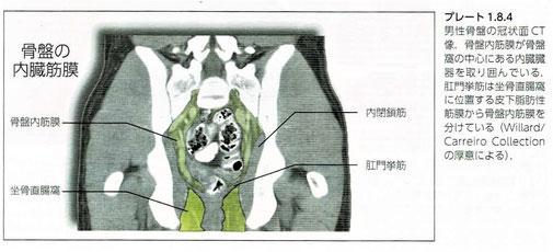 骨盤内臓筋膜