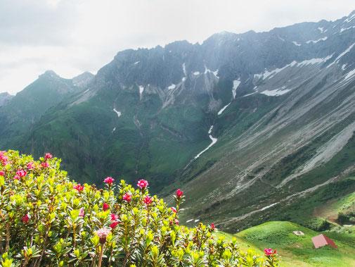 Alpenrosen im Vordergrund und unser Weg von wo wir kamen im Hintergrund