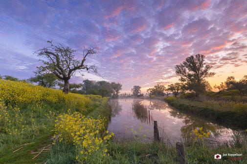 A lot of water! - Zonsopkomst boven Unesco Werelderfgoed Kinderdijk