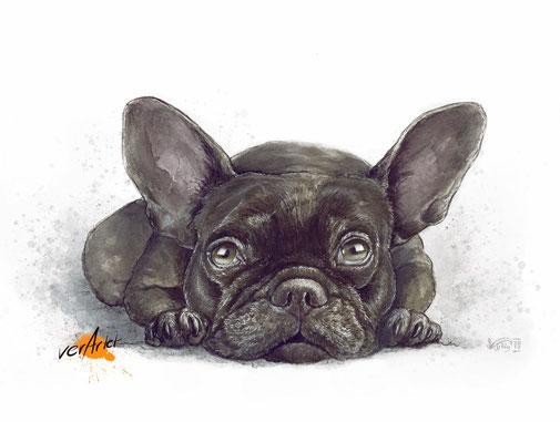 Französische Bulldogge Hund Tierportrait Kunstdruck
