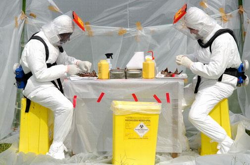 Ebola en laboratoire P4