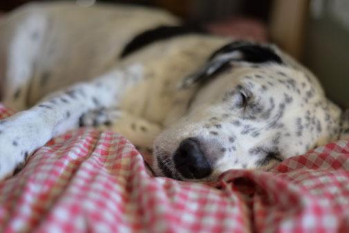 Entspannungstraining Hund