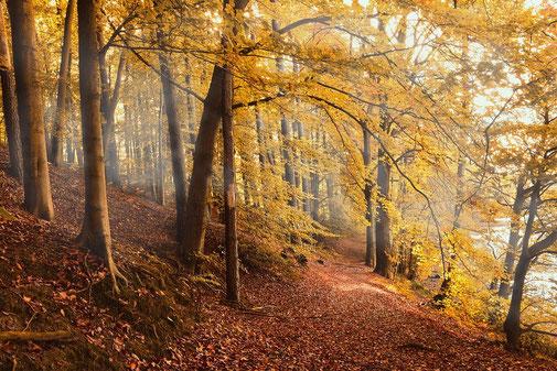 Ein guter Trüffelwald besteht hauptsächlich aus Haselnussbäumen, Kastanien, Eichen, Buchen und Pappeln.