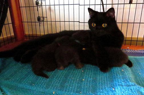 Marie und ihre Kitten (11 Tage alt) (Foto. 30.08.2015)