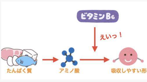 京都のパーソナルトレーニングジム パーソナルジム 四条 烏丸 三条 京都駅前 筋肉とビタミンの関係性